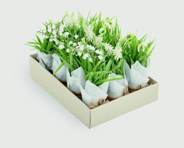 Premier Flowers In Pot Frosted/Vase Tissue Paper - 20cm